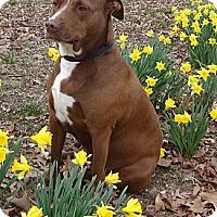 Adopt A Pet :: Sissy - Centerville, TN