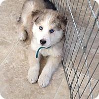 Adopt A Pet :: Tank - Egremont, AB
