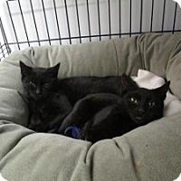 Adopt A Pet :: Lia & Lena - Island Park, NY