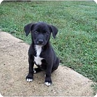 Adopt A Pet :: Shiloh - Adamsville, TN