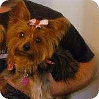 Adopt A Pet :: Josie - Jacksonville, FL