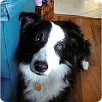 Adopt A Pet :: Boo Boo - Orlando, FL