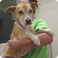 Adopt A Pet :: Dixie - Sacramento, CA