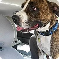 Adopt A Pet :: Jake - La Crosse, WI
