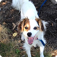 Adopt A Pet :: Patches - Washington, PA