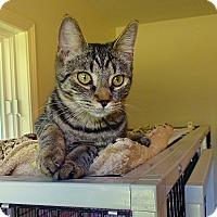 Adopt A Pet :: Felice - Victor, NY
