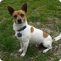 Adopt A Pet :: Freddie Mercury - Austin, TX