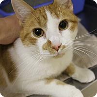Adopt A Pet :: Hoyt - Medina, OH