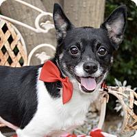 Adopt A Pet :: Ranger - Irvine, CA