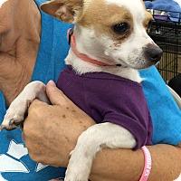 Adopt A Pet :: Tarzan JH - Schertz, TX