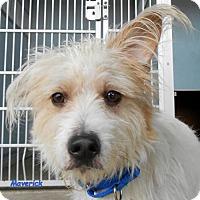 Adopt A Pet :: Maverick - Oskaloosa, IA