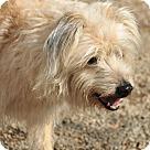 Adopt A Pet :: Dobie