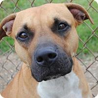 Adopt A Pet :: Lily - Anniston, AL