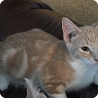 Adopt A Pet :: George - Boise, ID