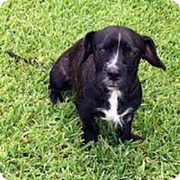 Adopt A Pet :: Miles Finch - Alvin, TX