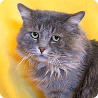 Adopt A Pet :: Stormy - Colorado Springs, CO