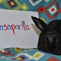 Adopt A Pet :: Sasaparilla - Erie, PA