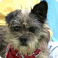 Adopt A Pet :: Martin - Evansville, IN