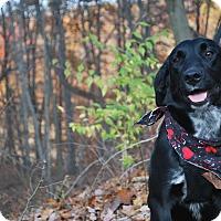 Adopt A Pet :: Lola - New Castle, PA