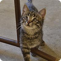 Adopt A Pet :: Mo - Larned, KS