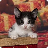 Adopt A Pet :: Landon - Clarksville, AR