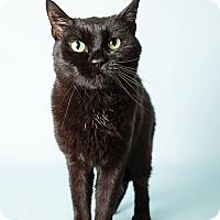 Adopt A Pet :: Mona Lisa - Hendersonville, NC