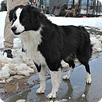 Adopt A Pet :: Sprocket - Yreka, CA