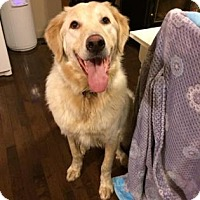 Adopt A Pet :: Clyde (Cabot) - Edmonton, AB