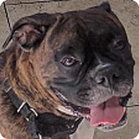 Adopt A Pet :: Dora - Central & West Florida, FL