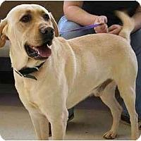 Adopt A Pet :: Duke Y - Cumming, GA