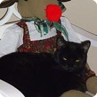 Adopt A Pet :: Miss Camille - Prescott, AZ