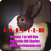 Adopt A Pet :: Heaven - Rockville, MD