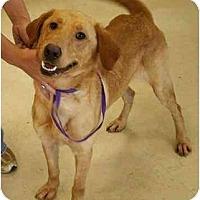 Adopt A Pet :: Scotty - Cumming, GA