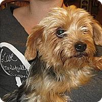 Adopt A Pet :: Bo Jo - Greenville, RI