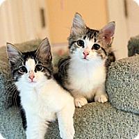 Adopt A Pet :: Tyson & Finn (Super Loving) - Arlington, VA