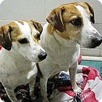 Adopt A Pet :: Russo and Petunia - Beacon, NY