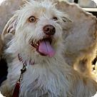 Adopt A Pet :: Squiggy