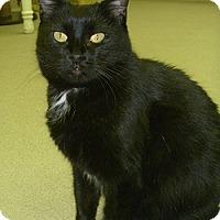Adopt A Pet :: Sara - Hamburg, NY