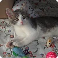 Adopt A Pet :: Henry - Acme, PA