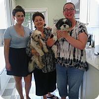 Adopt A Pet :: Gepetto - Sacramento, CA