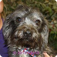 Adopt A Pet :: Reggie 1804/Foster Pierce - Madera, CA
