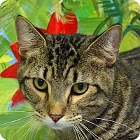 Adopt A Pet :: Bowser - Englewood, FL