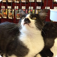 Adopt A Pet :: Bruce - Mountain View, CA