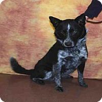 Adopt A Pet :: JASPER - Louisville, KY