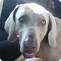 Adopt A Pet :: Macie - Birmingham, AL