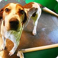 Adopt A Pet :: Ricochet - Redding, CA
