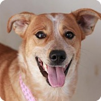 Adopt A Pet :: JULES - Kyle, TX
