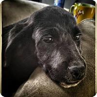 Adopt A Pet :: Emma - Leonardtown, MD