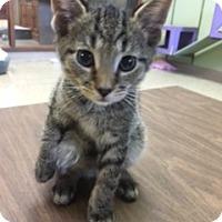 Adopt A Pet :: Branson - Medina, OH