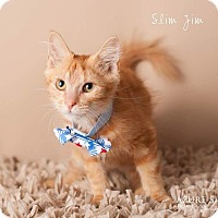 Adopt A Pet :: Slim Jim - Scottsdale, AZ